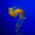 Jellyfish From The Deep Blue by Nila Newsom