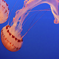 Jellyfishing by TM Schultze