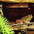 Jeremiah Was A Bullfrog by Kay Brewer