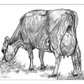 Jersey Milking Cow by Dan Pearce