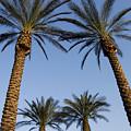 Jerusalem Palms by Mary Lane