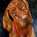 Jesse The Vizsla by JoLyn Holladay