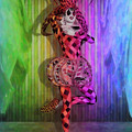 Jester Rainbow Girl  by Quim Abella