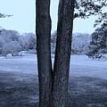 Jesus Christ Tree Cyan by Rob Hans