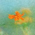 Jewel Of The Garden by Kim Hojnacki