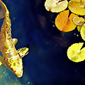 Jewel Of The Water by Barb Pearson