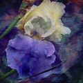 Jeweled Iris by Toni Hopper