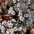 Jewels by Lance Sheridan-Peel