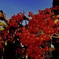 Jewels Of Autumn 4 by Elizabeth Tillar