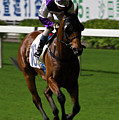 Jockey In Purple And White Riding Racehorse by Ndp