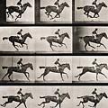 Jockey On A Galloping Horse by Eadweard Muybridge