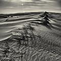 Jockey's Ridge Texture 7116 by Dan Beauvais