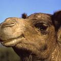 Joe Camel by Gary Wonning