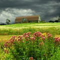 Joe Pye Weed And Barn by Roger Soule