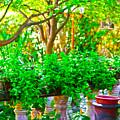 Joe T Garcias Gardens by Charles Loftin