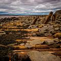 Joggins Fossil Cliffs by Mark Llewellyn