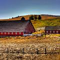 Johnson Road Barns by David Patterson
