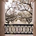 Josephine's View Of Oak Alley Plantation by Timothy V Ganier