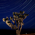 Joshua Tree And Star Trails by Steve Gadomski