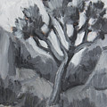 Joshua Tree Black And White Study by Diane McClary