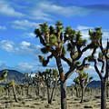 Joshua Tree Blue Sky by Kyle Hanson