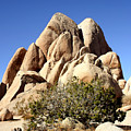 Joshua Tree Center by William Dey