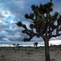 Joshua Tree Evening by Kyle Hanson