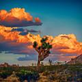Joshua Tree In All Its Beauty by Mariola Bitner