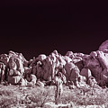 Joshua Tree Moonscape by Blake Webster