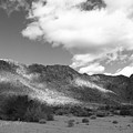 Joshua Tree National Park Tumbleweeds by Stephen Settles