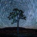 Joshua Tree Spiral by Peter Tellone