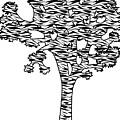 Joshua Tree Zebra Stripes by Steven Howes