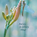 Joy In Ordinary Things by Terrie Sizemore