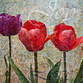 Joy Withtulips by Joselyn Holcombe