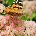 Joyful Butterfly by Jean Noren