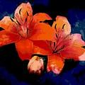 Joyful Lilies by Anne Sands
