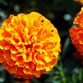 Joyful Orange Floral Lace by Clayton Bruster
