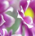 Joyful Sisters. Gentle Floral Macro by Jenny Rainbow