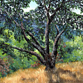 Juan Bautista De Anza Trail Oak by Laura Iverson