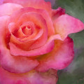 Judys Rose by Jeanette Mahoney