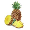 Juicy Pineapple by Irina Sztukowski