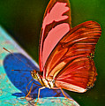 Julia Heliconian Butterfly In Iguazu Falls National Park-brazil by Ruth Hager