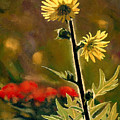 July Afternoon-compass Plant by Bruce Morrison