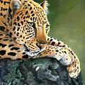 Jumanji by Sherry Shipley
