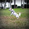 Jump by Mandy Shupp