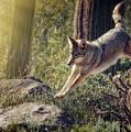 Jumping Rocks by Elaine Malott