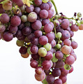 June Grapes #1 by Kevin McCollum