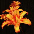 June Lily by Jeff Kurtz