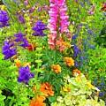 Juneau Has Flowers by Judy Coggin