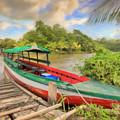 Jungle Boat by Nadia Sanowar